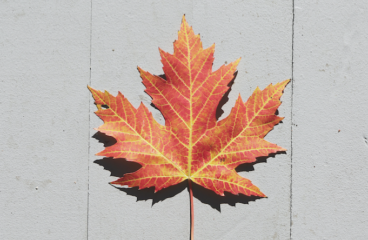 O CANADA – Great Conjunction of 2020 – outlook for Canada